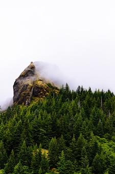 Tiro vertical de árboles cerca de una montaña en una niebla con un fondo blanco.