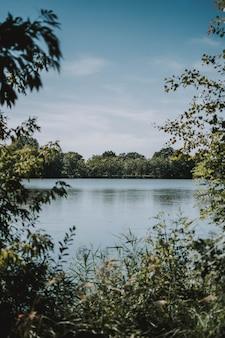 Tiro vertical de árboles y plantas cerca del mar con bosque en la distancia