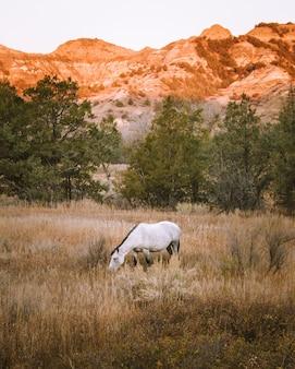 Tiro vertical de un caballo blanco en un campo de hierba seca con una montaña en el fondo