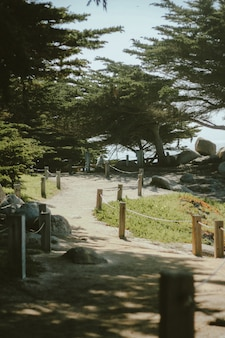 Tiro vertical de un camino hasta la colina cerca de los árboles en un día soleado
