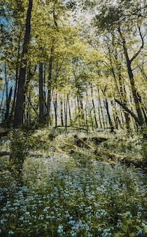 Tiro vertical de un campo de flores azules con hojas verdes en el bosque de árboles