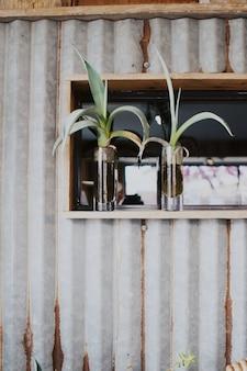 Tiro vertical de dos plantas en macetas verticales de vidrio.