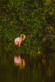 Tiro vertical de flamenco rosado de pie en el agua cerca de los árboles