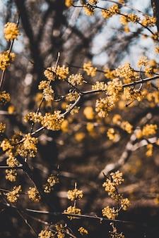 Tiro vertical de flores amarillas con fondo natural borroso en un día soleado