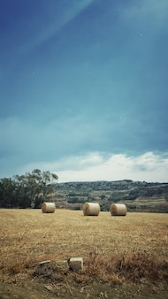 Tiro vertical de hayricks en medio del campo bajo el cielo despejado