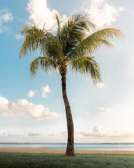 Tiro vertical de una hermosa palmera al borde del mar bajo el brillante cielo soleado