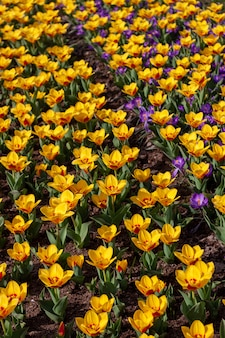 Tiro vertical de hermosas flores coloridas en un campo
