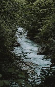 Tiro vertical de un hermoso río con una fuerte corriente y vegetación alrededor