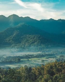 Tiro vertical de un hermoso valle de montaña con árboles verdes y cubierto de niebla suave.
