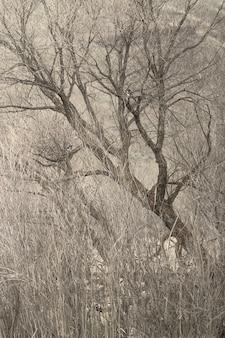 Tiro vertical de hermosos árboles secos en medio de un campo