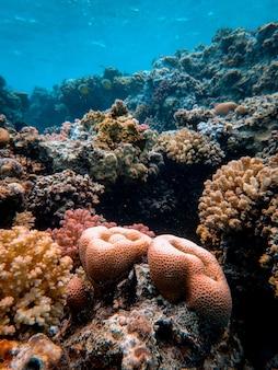 Tiro vertical de hermosos corales bajo el mar