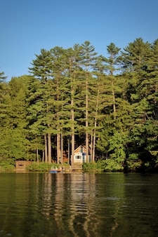 Tiro vertical de un lago y pinos en un día soleado