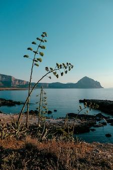 Tiro vertical de plantas que crecen en la orilla cerca del mar con montañas y cielo azul de fondo
