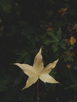 Tiro vertical del primer de una hoja amarilla del otoño en un ambiente natural