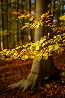 Tiro vertical del primer de hojas amarillas y marrones en la rama con el fondo natural borroso