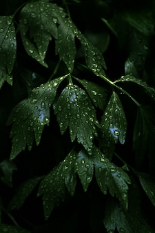Tiro vertical del primer de hojas verdes frescas con muchas gotas de rocío en ellas