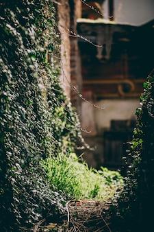 Tiro vertical del primer de plantas en una pared