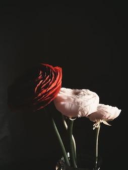 Tiro vertical del primer de rosas rojas y blancas en un fondo negro