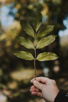 Tiro vertical del primer de un varón que sostiene una rama con natural borrosa