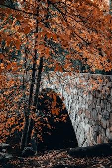Tiro vertical de un puente de piedra y un árbol con hojas de naranja en otoño
