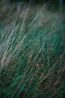 Tiro vertical selectivo del primer de la hierba verde en un campo de hierba