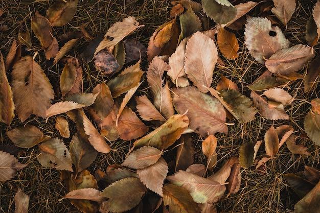 Tiro de vista superior de hojas marrones