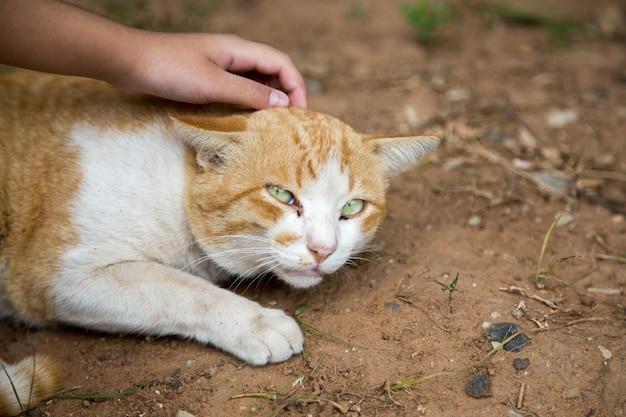 Tocar gato callejero en el suelo en el parque
