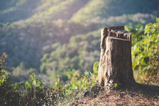 Tocón de árbol en un bosque de coníferas verde y brillante