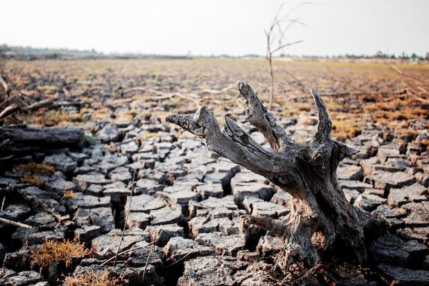 Tocones secos en suelo agrietado.