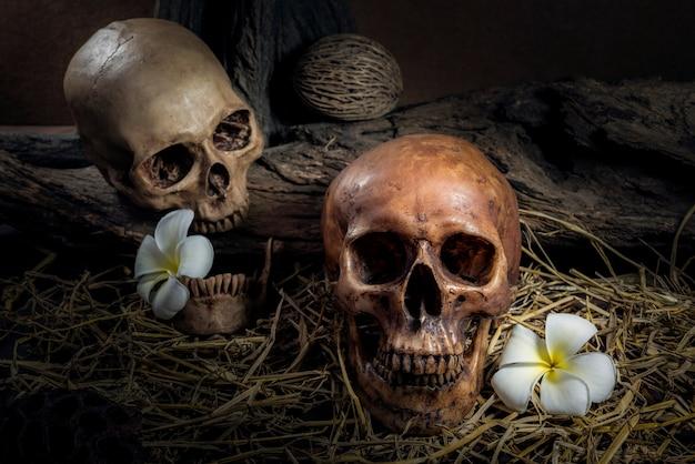 Todavía vida pareja cráneo humano con plumeria flor y heno