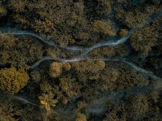 Toma aérea de camino en medio del bosque con árboles verdes