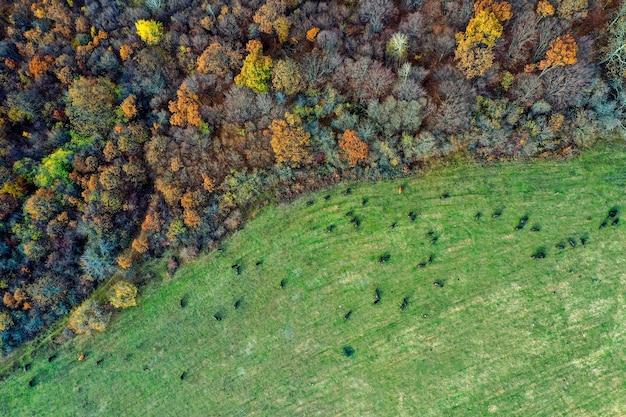 Toma aérea de un campo con árboles coloridos en un bosque