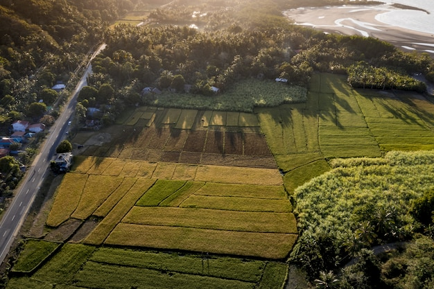Toma aérea del campo de hierba cerca de la carretera y el mar con árboles durante el día