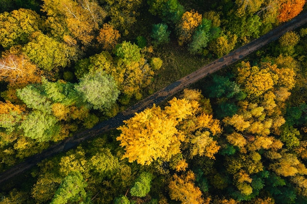 Toma aérea del hermoso bosque otoñal