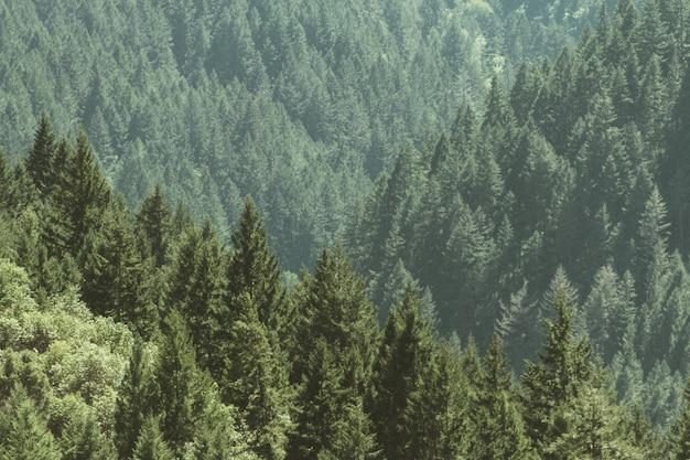 Toma aérea de un hermoso bosque con pinos