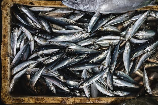 Toma aérea de peces en un mercado de pescado temprano en la mañana