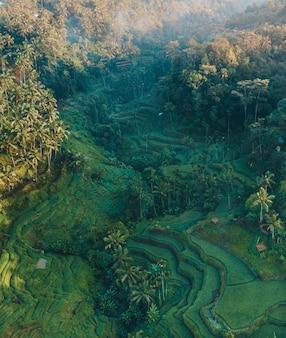 Toma aérea vertical de colinas cubiertas de hierba y palmeras durante el día