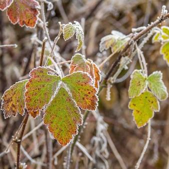 Toma de enfoque selectivo de hermosas hojas verdes de otoño en ramas de madera