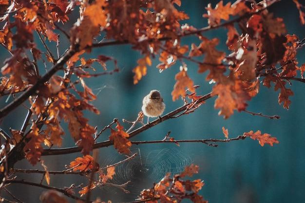 Toma de paisaje de un pájaro ruiseñor