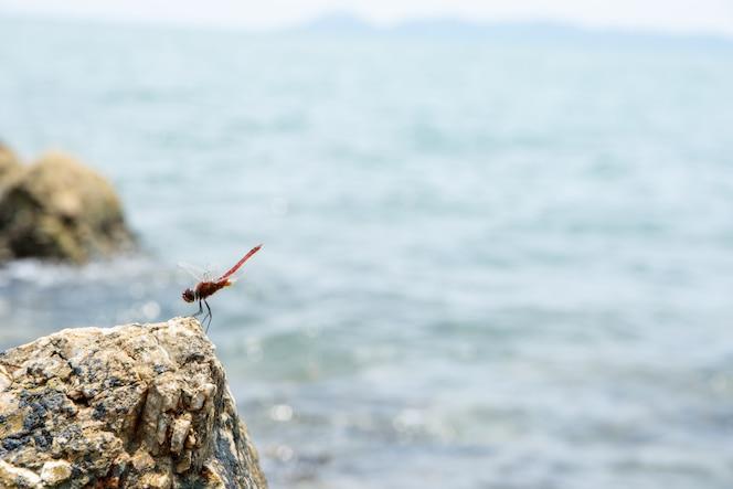 Toma un primer plano de una libélula