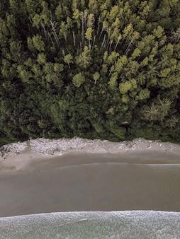 Toma vertical aérea de un bosque cerca de una costa