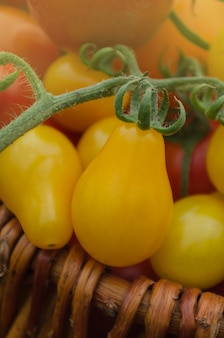 Tomate orgánico de pera amarilla. tomate llamado gota amarilla. tomate de comida sana orgánica natural.
