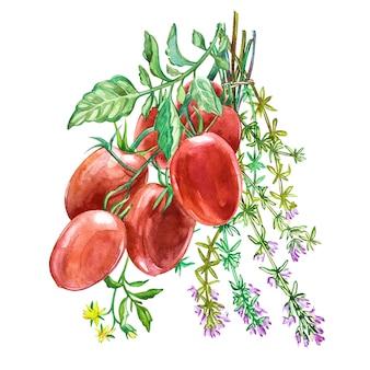 Tomate roma con tomillo. acuarela dibujada a mano ilustración.