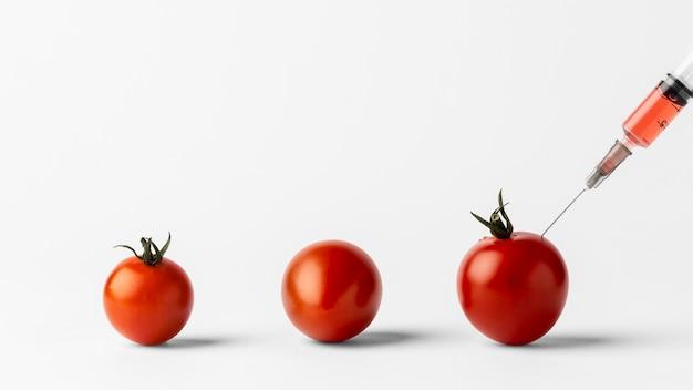 Tomates cherry de alimentos modificados con productos químicos transgénicos