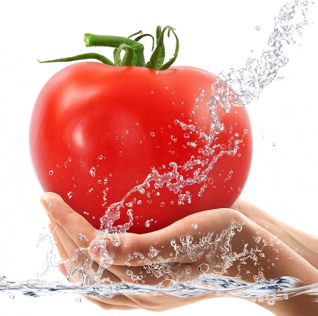 Tomates frescos en manos cayendo en agua