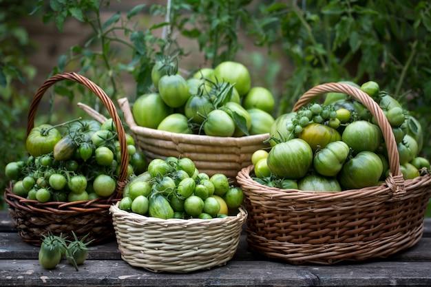 Tomates verdes en cestas