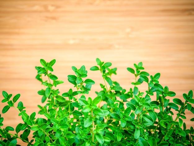 El tomillo del limón del primer se va del jardín de hierbas.
