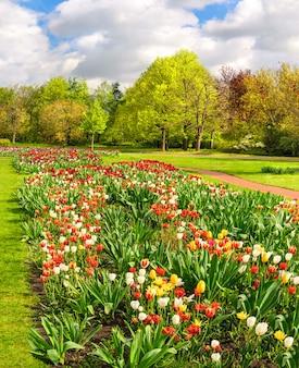 Tonalidades coloridas en el jardín de primavera