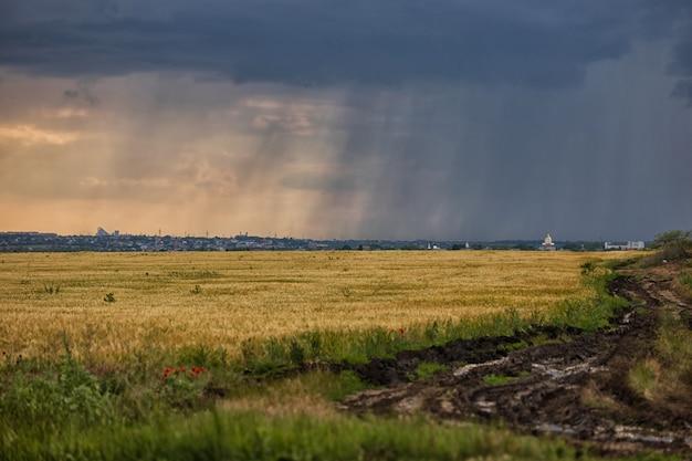 Tormenta eléctrica sobre un campo de trigo amarillo, un camino rural sucio y vetas de lluvia en el horizonte sobre el campo