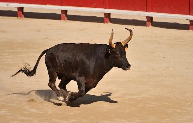 Toro negro corriendo en la arena